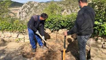 Replantacion de árboles en varios senderos del santuario